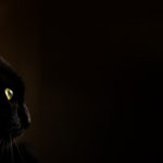 Turkish-Superstitions-Black-Cats-are-Bad-Luck
