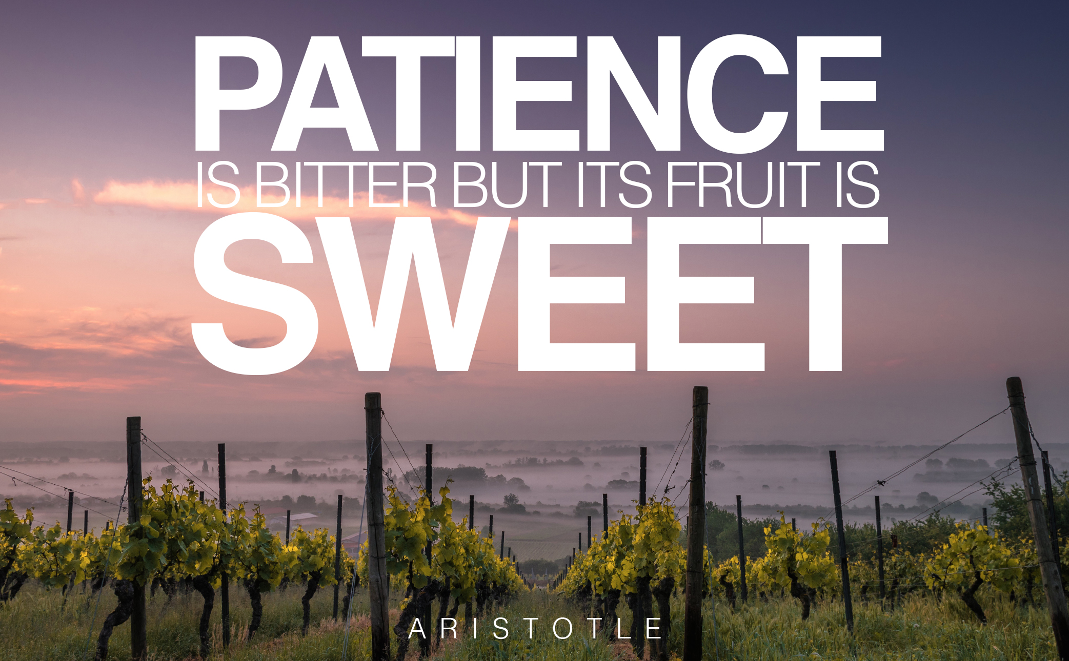 featured-image-designed-and-made-in-turkey-bitter-patience