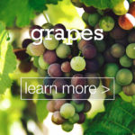 featured-image-designed-and-made-in-turkey-grapes-uzum