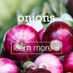 featured-image-designed-and-made-in-turkey-onions-sogan