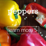 featured-image-peppers-biber