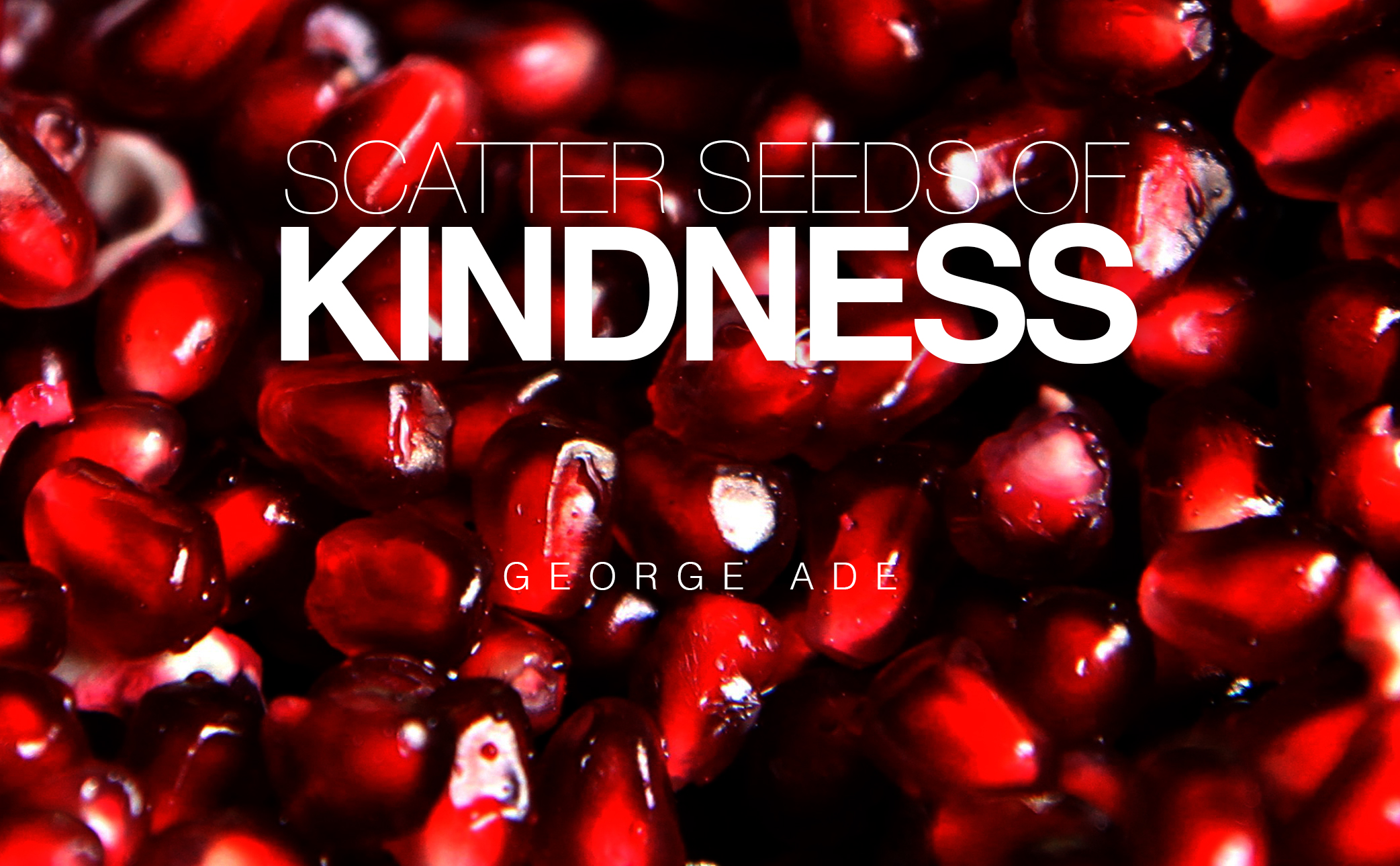 featured-image-seeds-of-kindness
